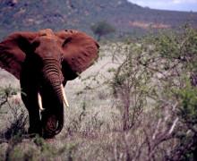 earth ivory - 2