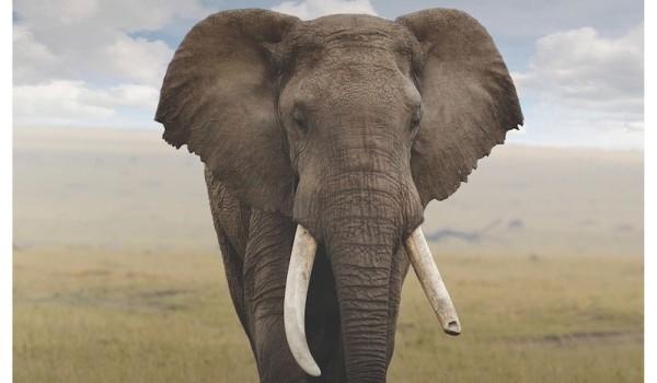 earth ivory - one sheet